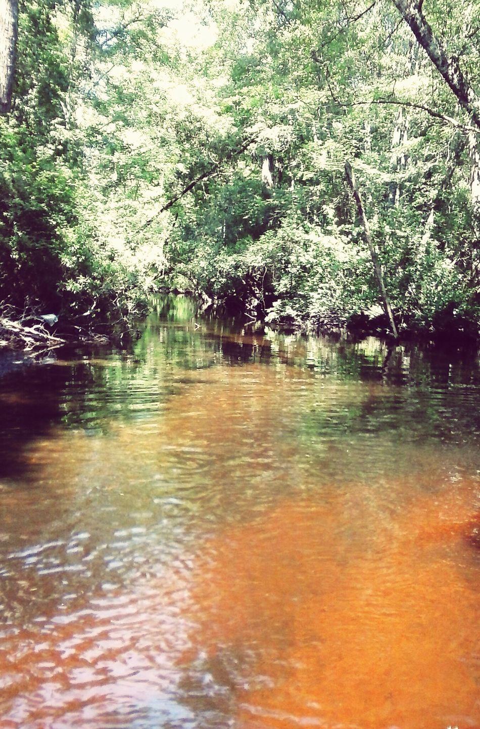 Ochlawaha Creek Creek Creek Life Lovely Weather Relaxing Beautiful Day Enjoying The Sun Lake Life Country Life Nature