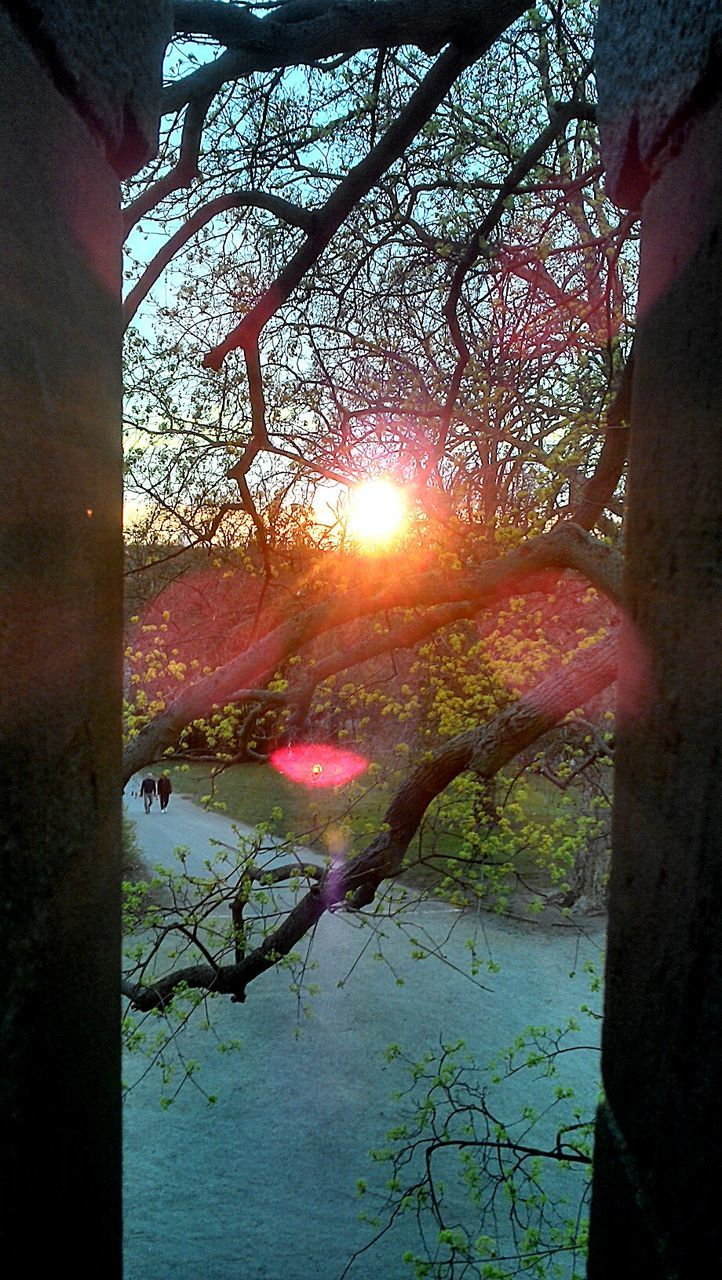tree, nature, tranquility, lens flare, beauty in nature, tranquil scene, branch, outdoors, sunlight, no people, lake, water, sun, day, autumn, growth, scenics, leaf, sky