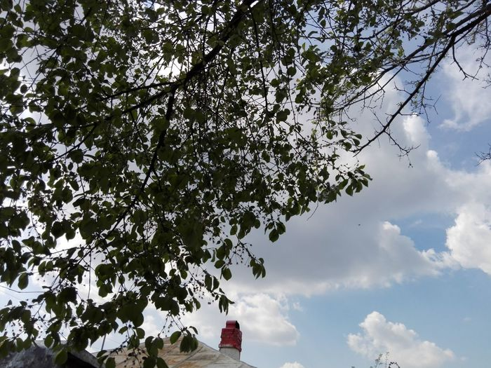 Cloud - Sky Tree Sky Outdoors Nature Low Angle View No People Beauty In Nature Architecture Day Sky And Branches Edited By @WOLFZUACHiV WOLFZUACHiV Photos Wolfzuachiv Veronica Ionita On Market Huawei Photography Eyeem Market Ionita Veronica Huaweiphotography WOLFZUACHiV Photography Nature Beauty In Nature