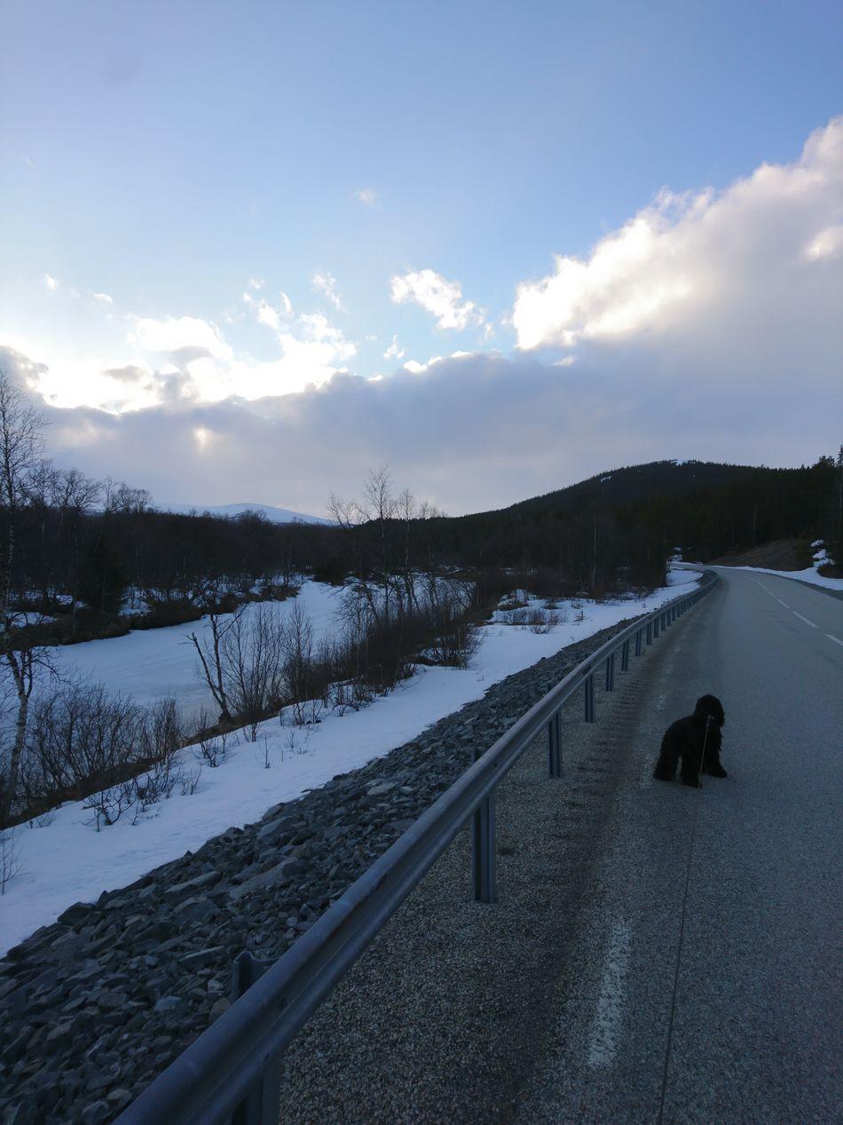 Walking With Friends Cold Temperature Cloud - Sky Snow Dog Mountain Tree Beauty In Nature American Cocker Spaniel Härjedalen Bella