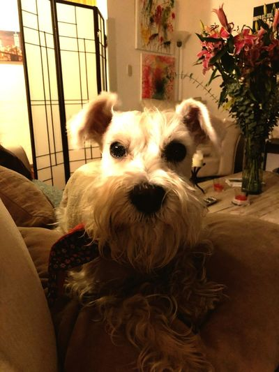 Noah Pets Dog Domestic Animals One Animal Animal Themes Mammal Indoors