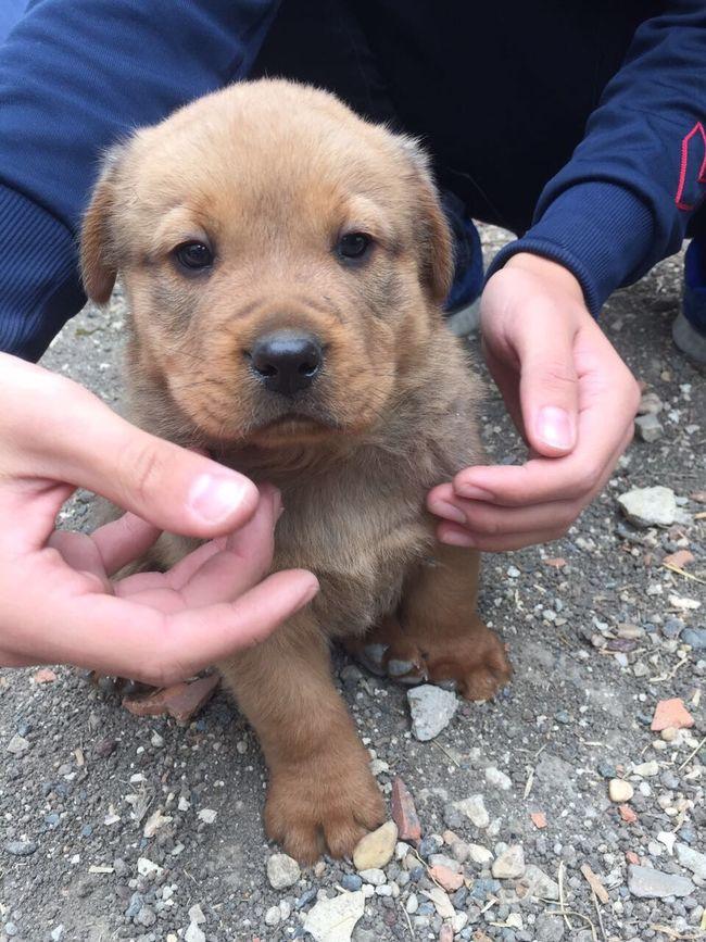One Animal Dog Pets Puppy Brown Coktatlı Young Animal First Eyeem Photo