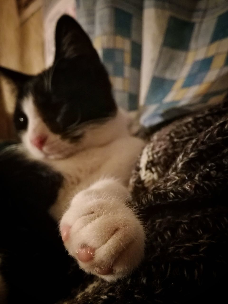domestic cat, pets, domestic animals, one animal, mammal, animal themes, cat, feline, indoors, no people, close-up, day
