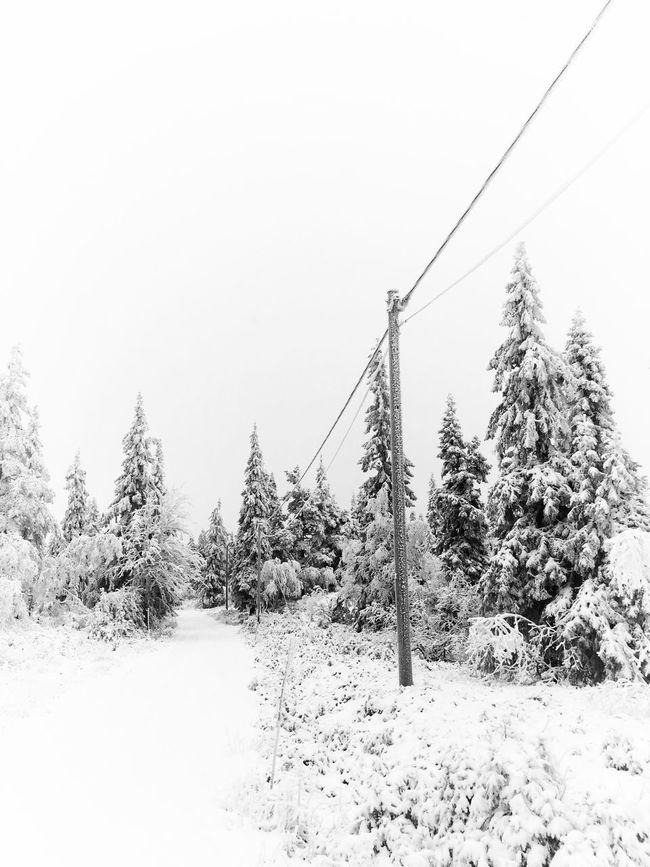 ❄️❄️❄️❄️💙❄️❄️❄️❄️ Enjoying Life Vackra Dalarna Tadaa Community EyeEm Nature Lover Trees TreePorn It's Cold Outside Blackandwhite