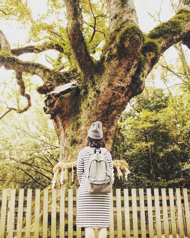 God tree Do you also would have been want to see this tree?? Japanese  Godtree God Tree Followforfollow My Eyes Become You