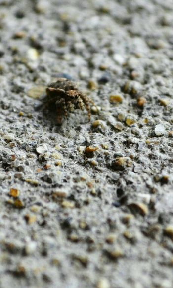 Small Things Small Creatures Spider Close Up Eight Legs Naturelovers