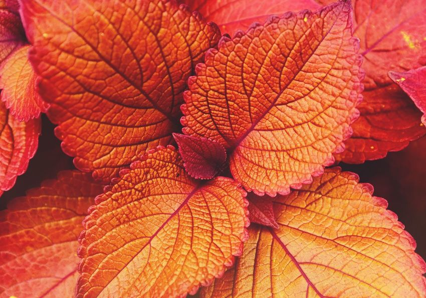 Texture Leaf Autumn Change Nature Orange Color Beauty In Nature Dry Close-up Day Outdoors No People Fragility