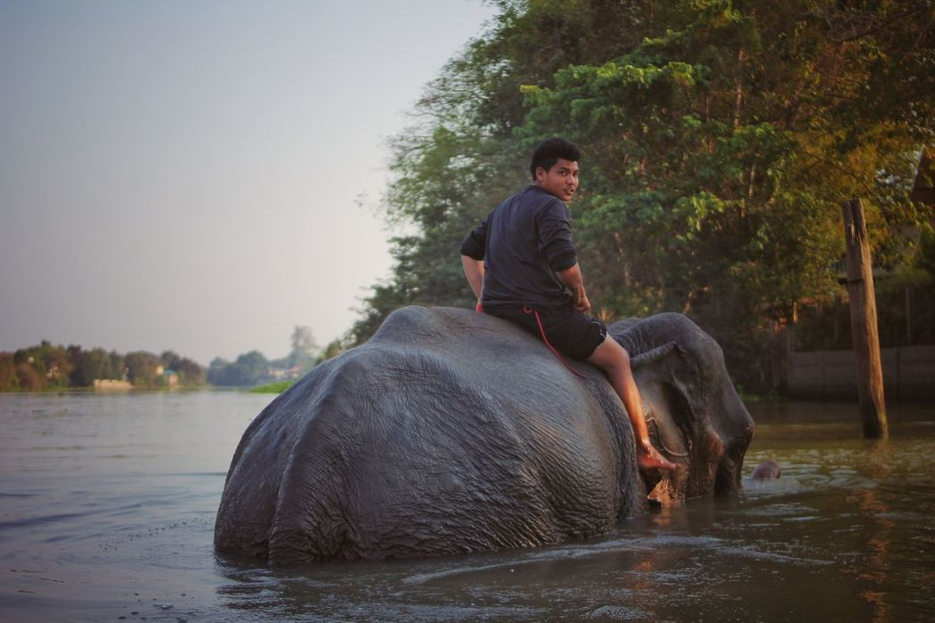 River Mammal Water Adult Nature Travel People Water Buffalo Domestic Animals Rural Scene Men Outdoors Farmer Togetherness Adults Only Elephant Day Tree Only Men Torture Tortured Elephant ♥ Enjoying Life Ayutthaya Ayutthaya | Thailand