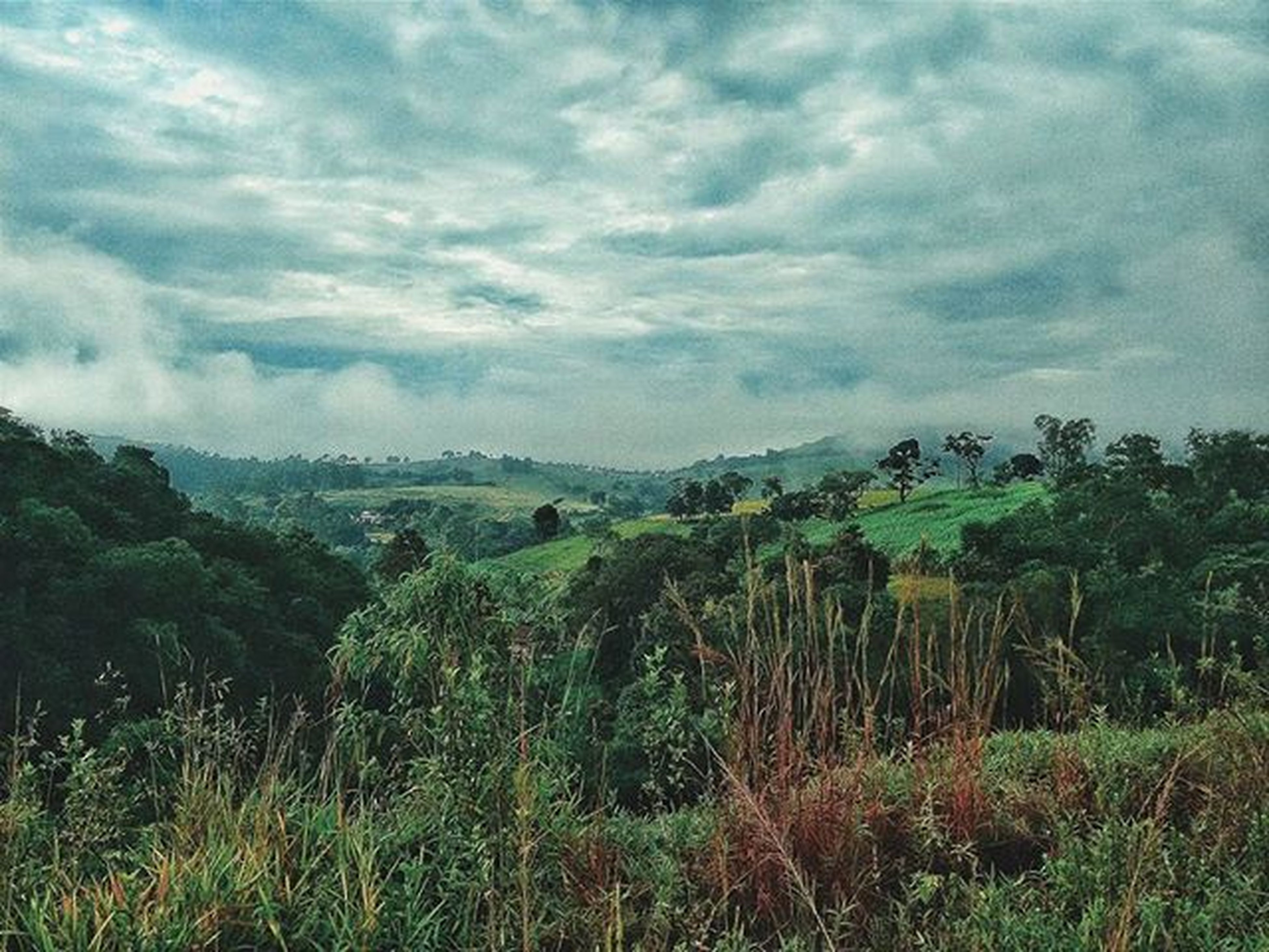 sky, cloud - sky, cloudy, landscape, tranquil scene, tranquility, scenics, nature, grass, field, beauty in nature, growth, cloud, plant, tree, non-urban scene, overcast, idyllic, day, outdoors