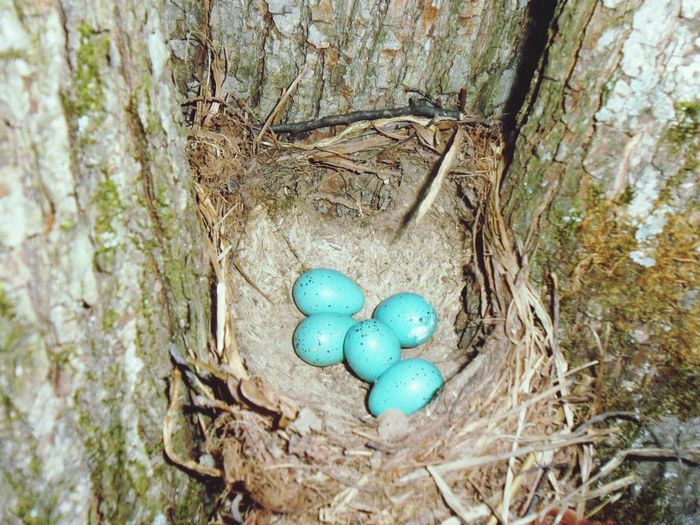 BYOPaper! High Angle View No People Day Easter Outdoors Tree Trunk Bird Nest Close-up Nature Tree яйцо яйца The Street Photographer - 2017 EyeEm Awards The Portraitist - 2017 EyeEm Awards The Secret Spaces Beauty In Nature Art Is Everywhere Live For The Story
