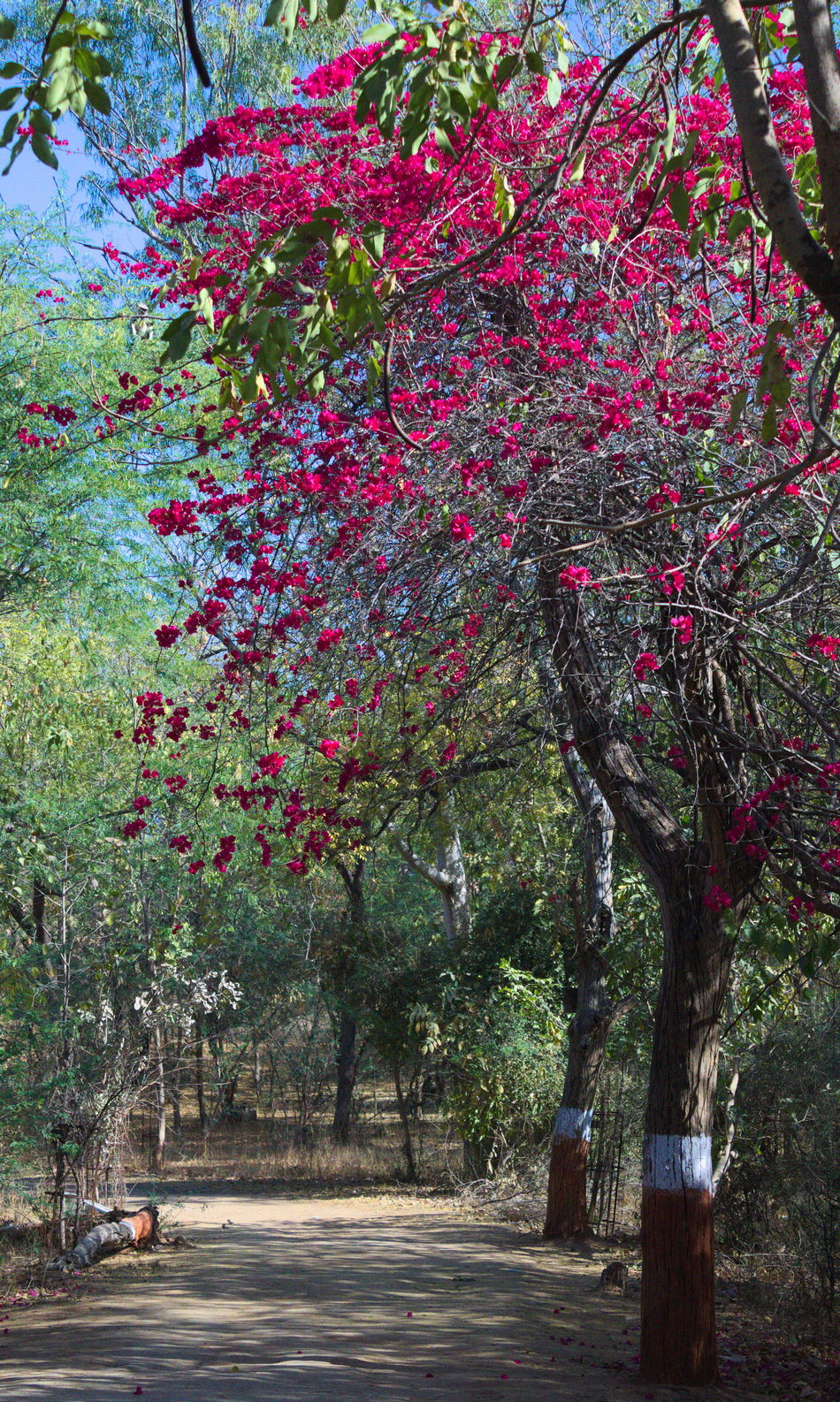 Tree Beauty In Nature Branch Branches No Leaves Chirag Nimavat Chiragnimavat Landscape Nature Photography Tree Autumn Leaves Autumn Tree Pink Flowers Green Background Pink Flowers In Bloom Pink Flowers Green Grass Pink Flowers Tree Pink Tree Blossom Pink Tree EyeEmNewHere