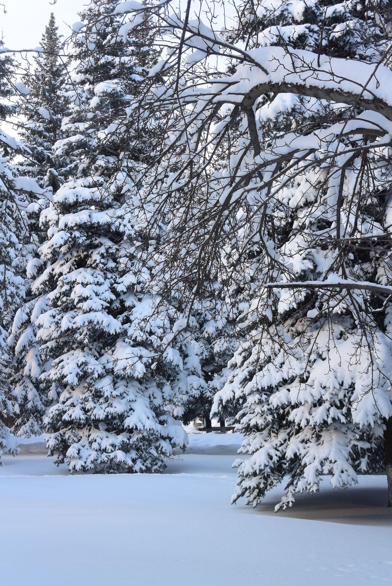 зима 2016 Fairytale  Зимняя сказка❄️⛄️❄️ Hello World Sound Of Life Nature