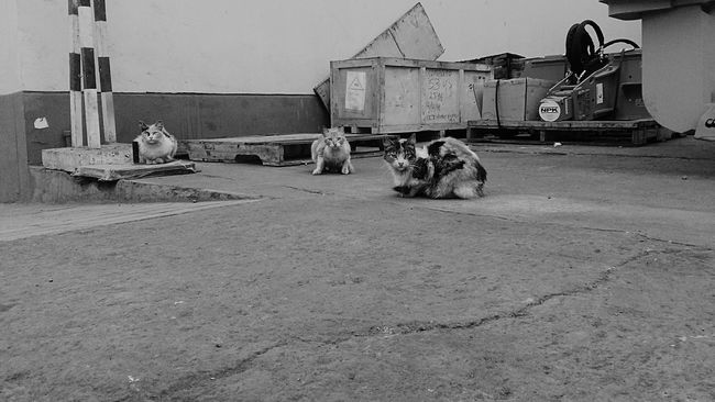 Wildlife Black & White Monochrome Monochrome Photography