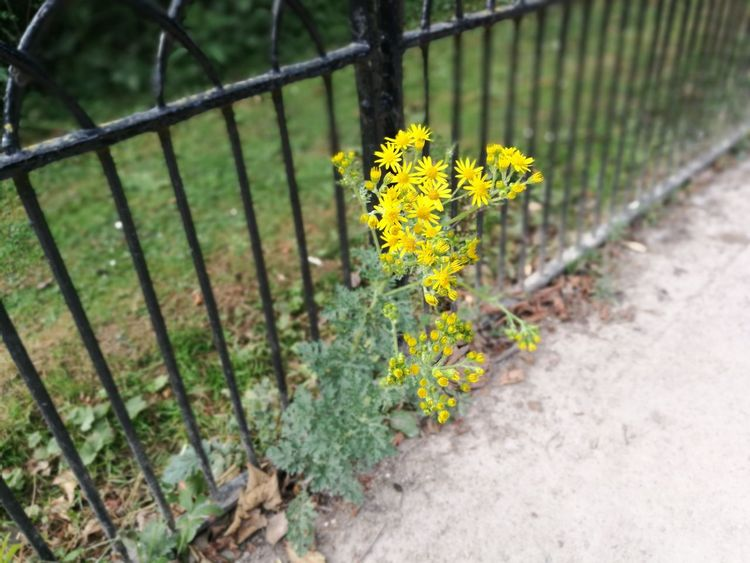Plant No People Nature Outdoors Protection Growth Day Focus On Foreground Close-up Yellow Flower Nottingham Parkland Outdoor Photography High Angle View Green Color Lovelyday💛 Highfields Park
