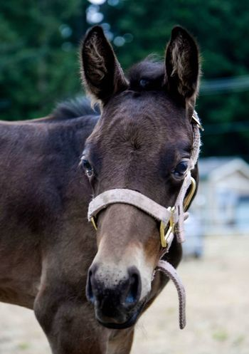 Baby Foal Horse Bay Animals Filly Goregous Precious Thoroughbred Friesian