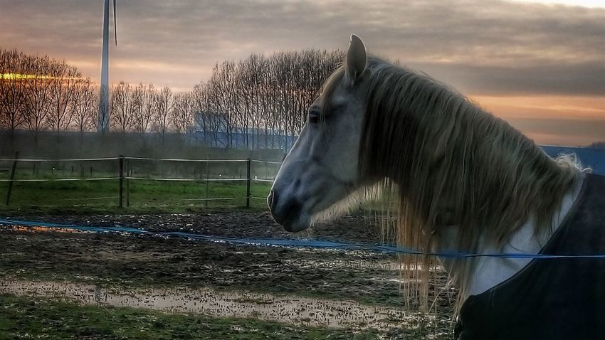 Evening sun... Horse Animal Themes HDR One Animal HDR Collection Sun Evening Sky Evening Light Nature Beauty Photo♡ Sony Xperia M5 Nature Photography Beauty In Nature EyeEm Nature Lover Landscape