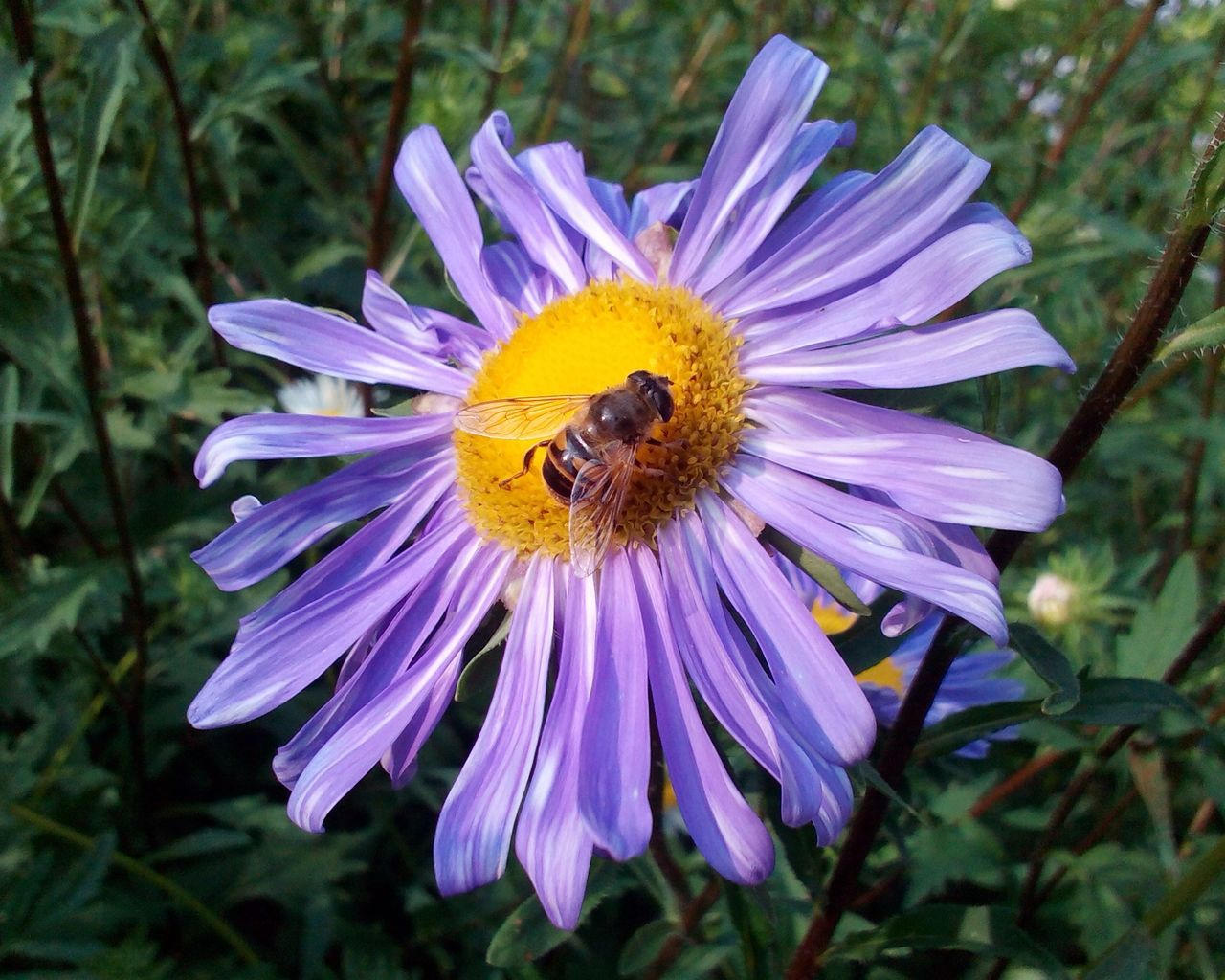 flower, petal, nature, insect, fragility, beauty in nature, plant, growth, flower head, animal themes, animals in the wild, freshness, outdoors, purple, one animal, no people, bee, focus on foreground, pollen, day, close-up, pollination, animal wildlife, blooming, bumblebee