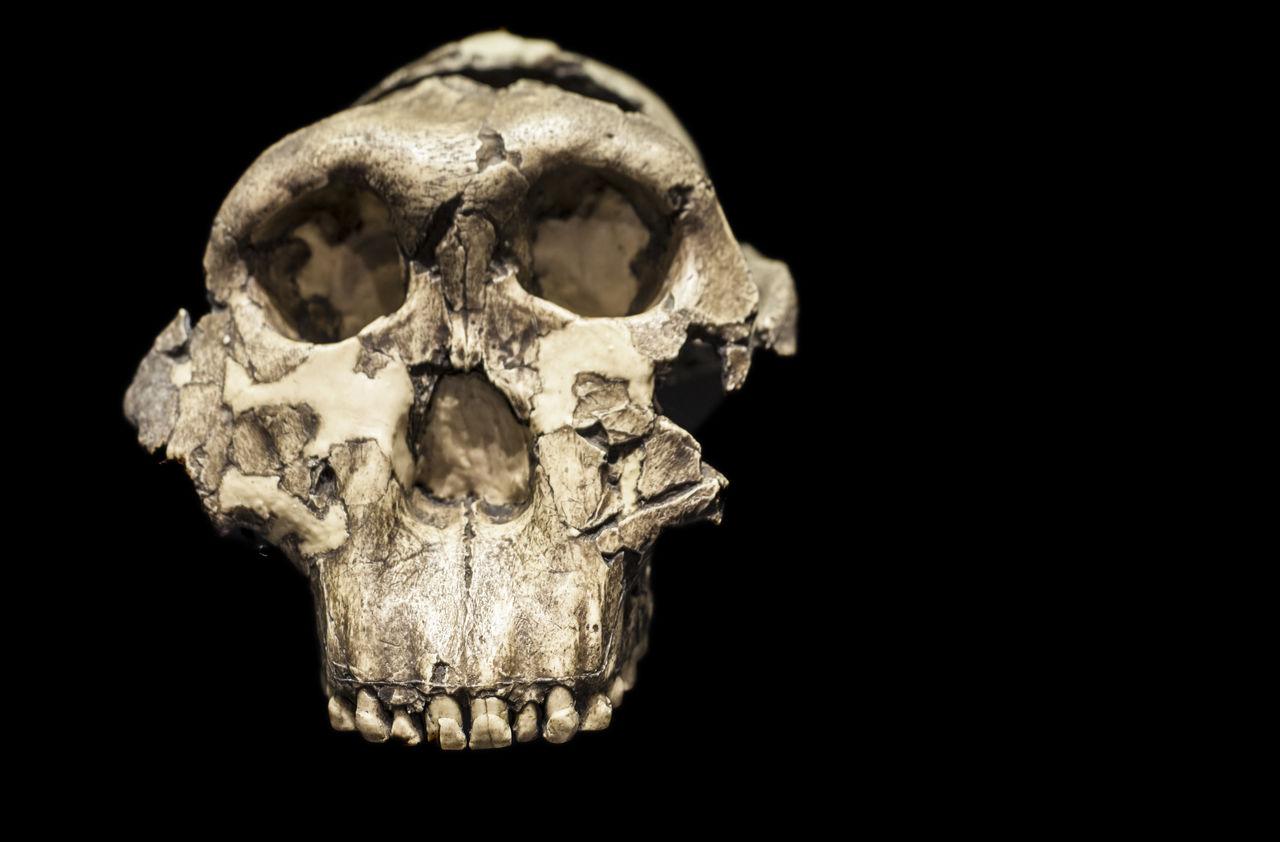 human skull, black background, human skeleton, human bone, bone, human body part, studio shot, spooky, close-up