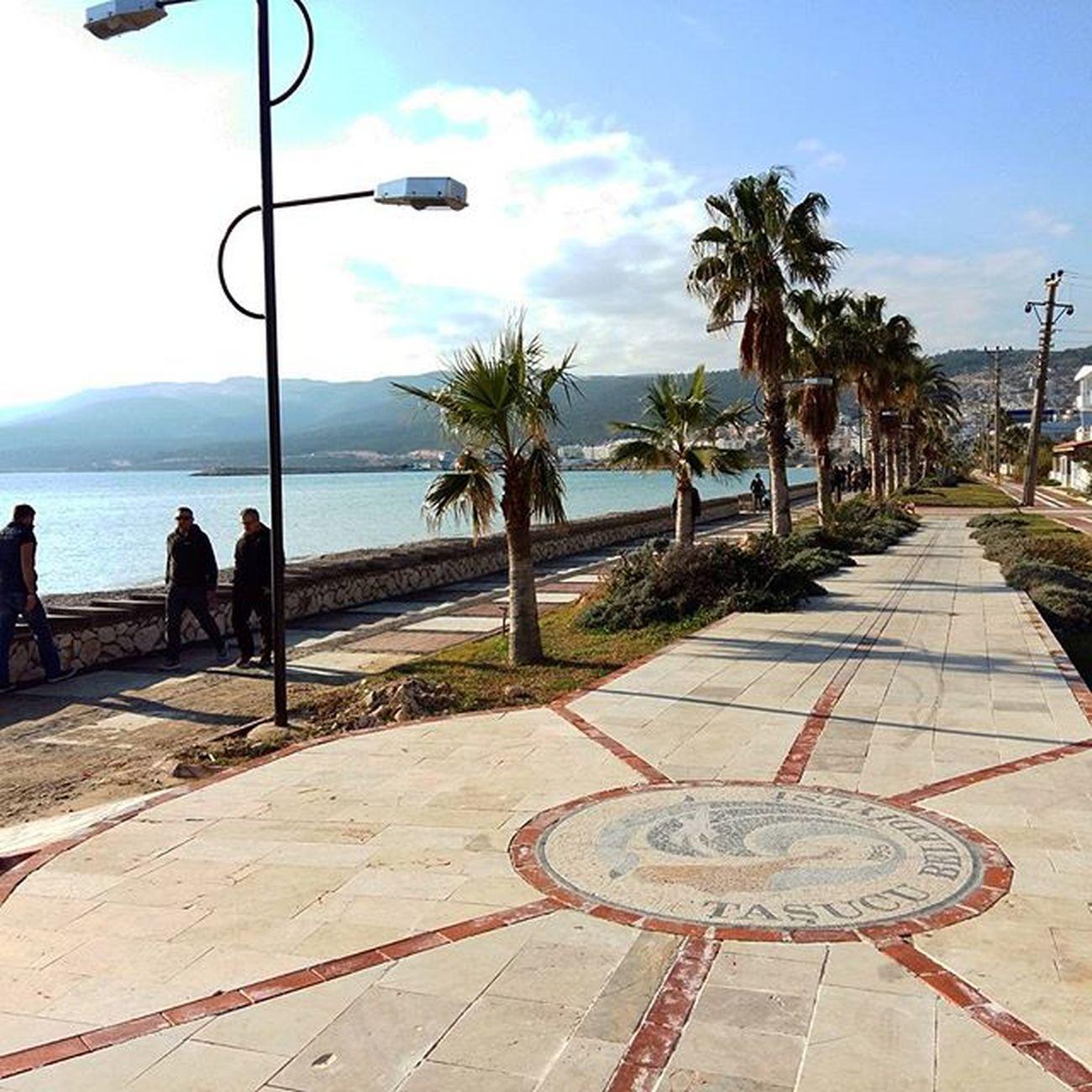 Mersin Tasucu Taşucusahili Akdeniz Kışgüneşi Palmiyeler