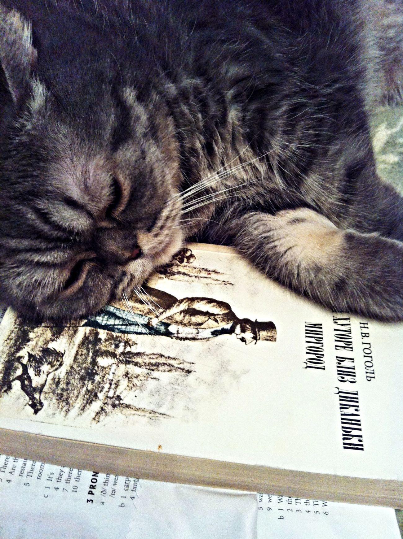 Gogol dreams