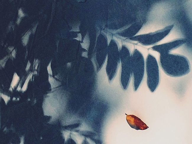 Patterns Nature Leaves Leaf First Eyeem Photo