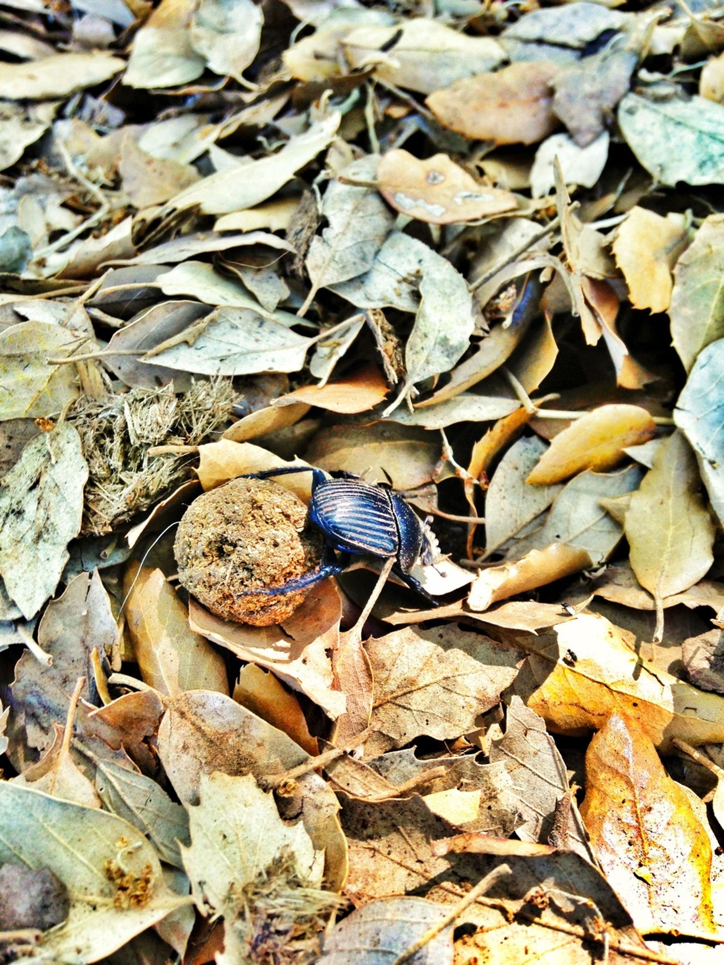 animal themes, animals in the wild, high angle view, one animal, wildlife, abundance, nature, leaf, full frame, insect, outdoors, autumn, day, dry, stone - object, backgrounds, close-up, natural pattern, field, no people