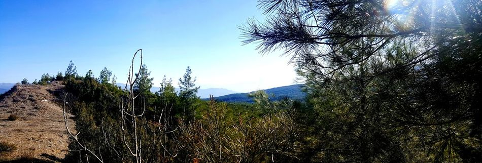 Türkiye Ontheroad Tree Nature Growth No People Sky Outdoors Beauty In Nature Day Close-up Mountain