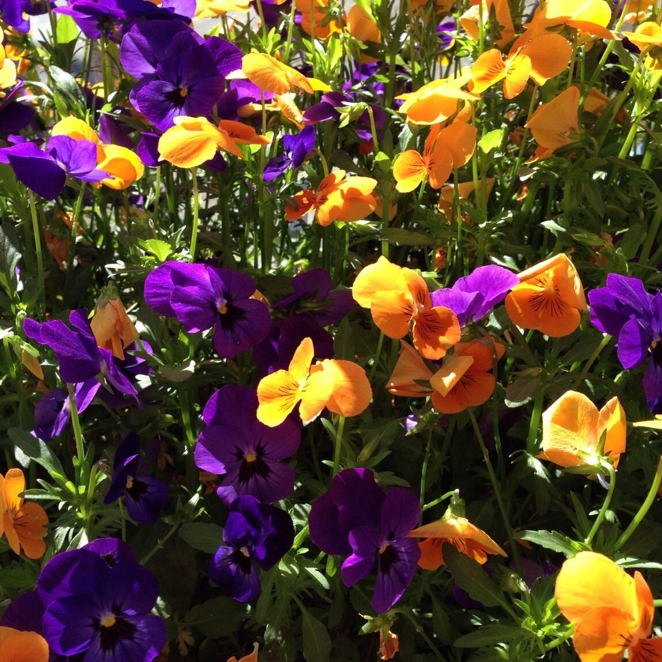 Flowers Beautiful Sunny Today