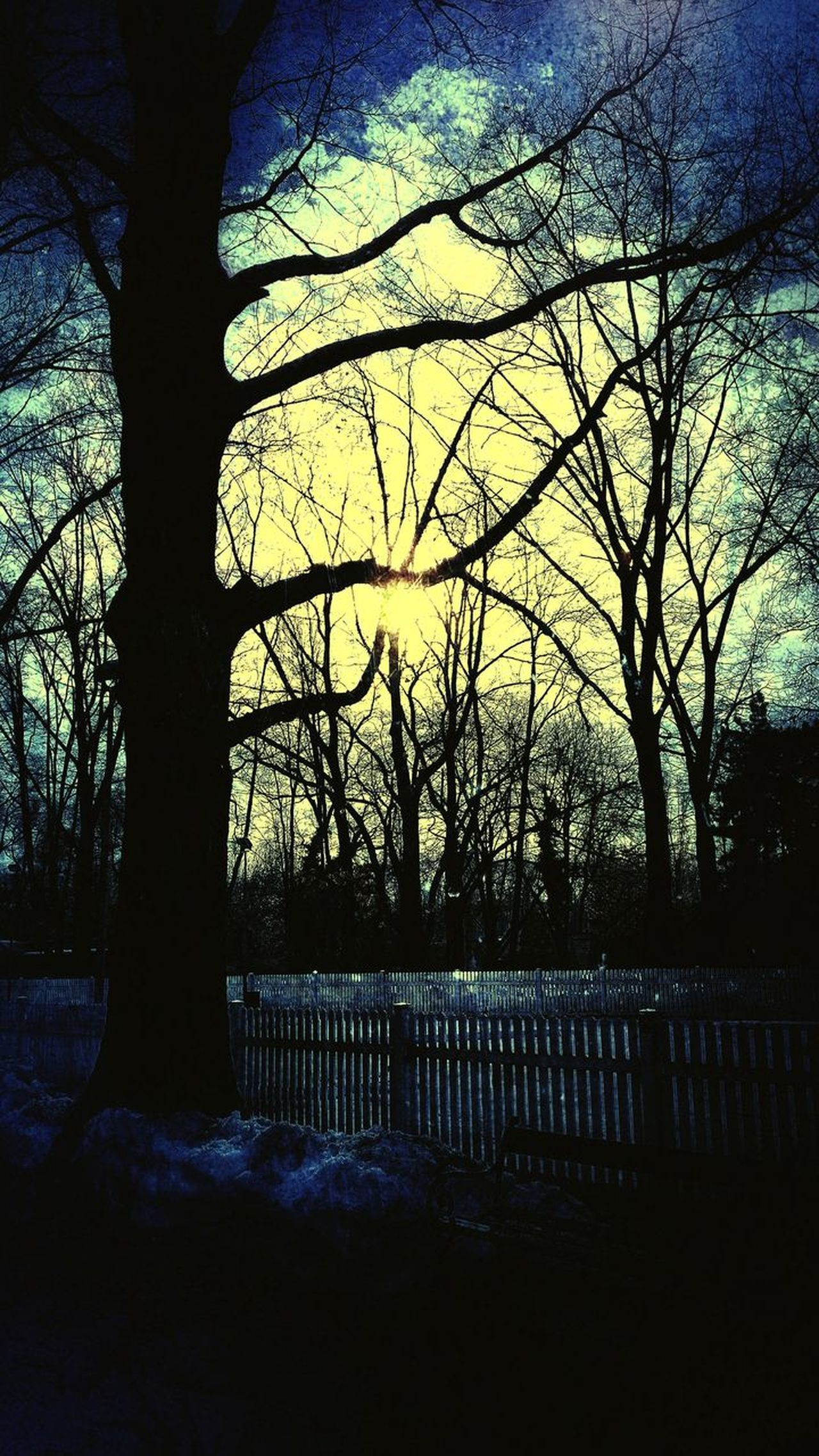 Tree Sunset Silhouette Sky No People Outdoors Nature Water Close-up Beauty In Nature Day Vintage Photo Grungy Textures Grunge Sunlight Hot Sky Scenics Sunsets Parc Dramatic Sky Tree Nature Parks And Recreation Winter Cloud - Sky