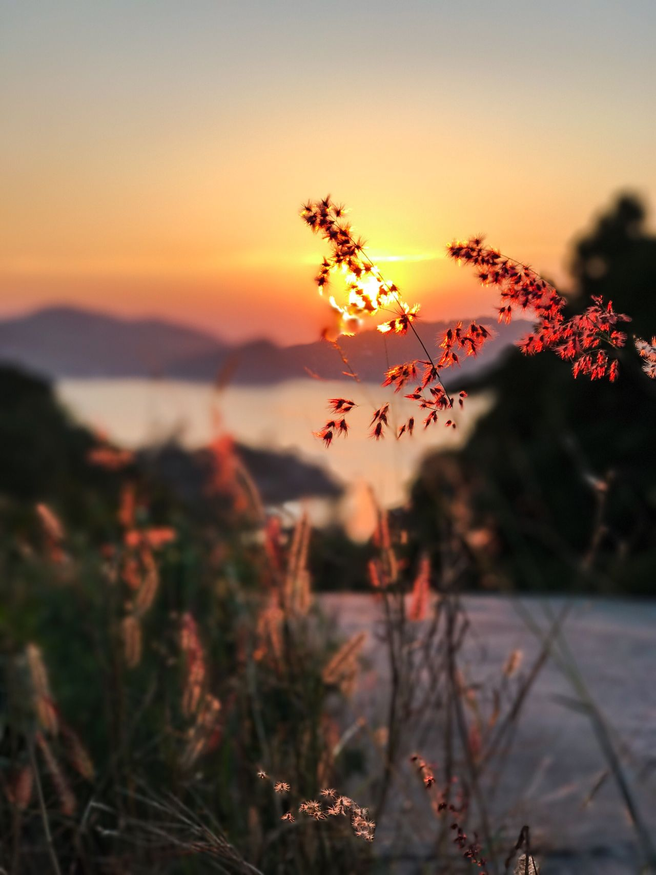 Sunset Nature Beauty In Nature Growth Outdoors Plant No People Flower Focus On Foreground Tranquility Scenics Sky Mountain Tree Water Close-up Twilight Grass Growth Sun Mountains Road Sea Horizon Over Water Koh Phangan