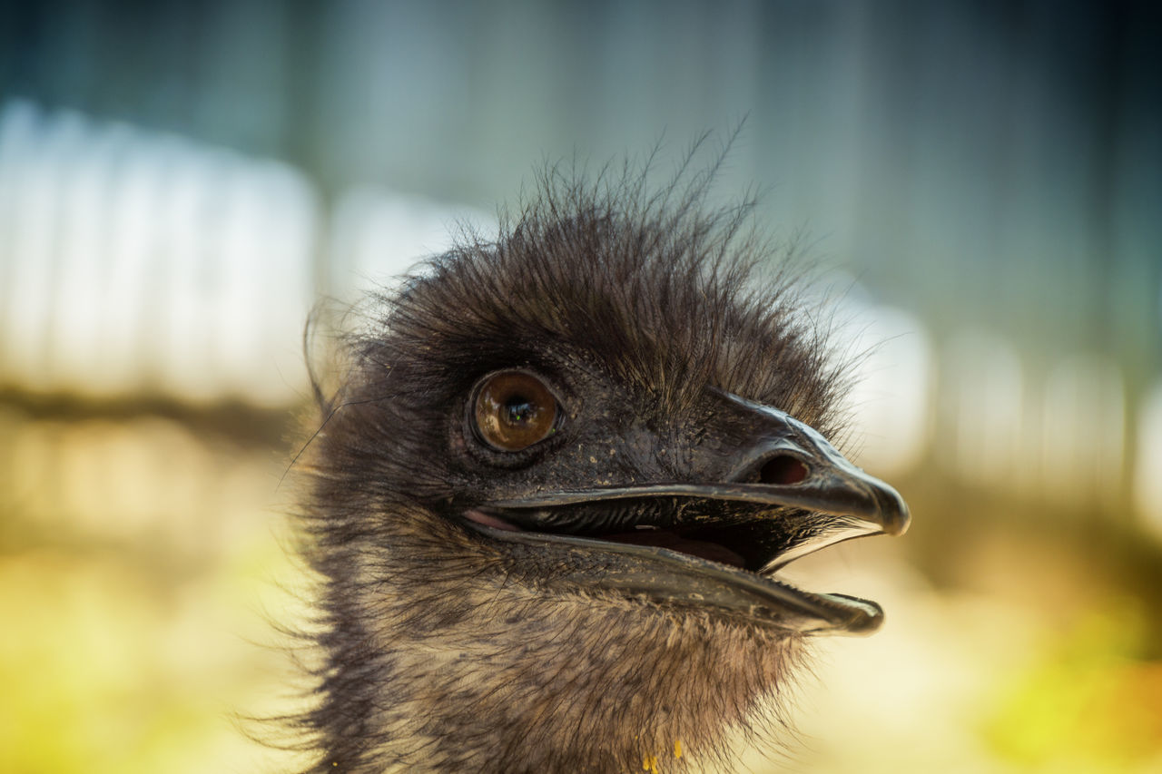 Ostrich, Florida, USA Animal Photography Animal Themes Close-up Florida Homestead Ostrich Say Hello Vacation Time