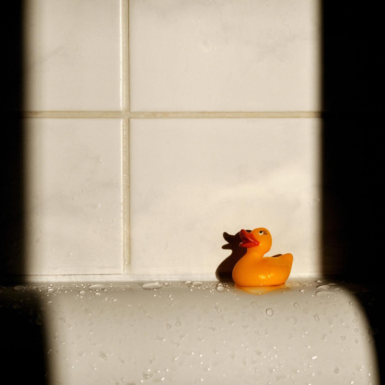Beautiful stock photos of bath, Animal Representation, Bathroom, Bathtub, Drop