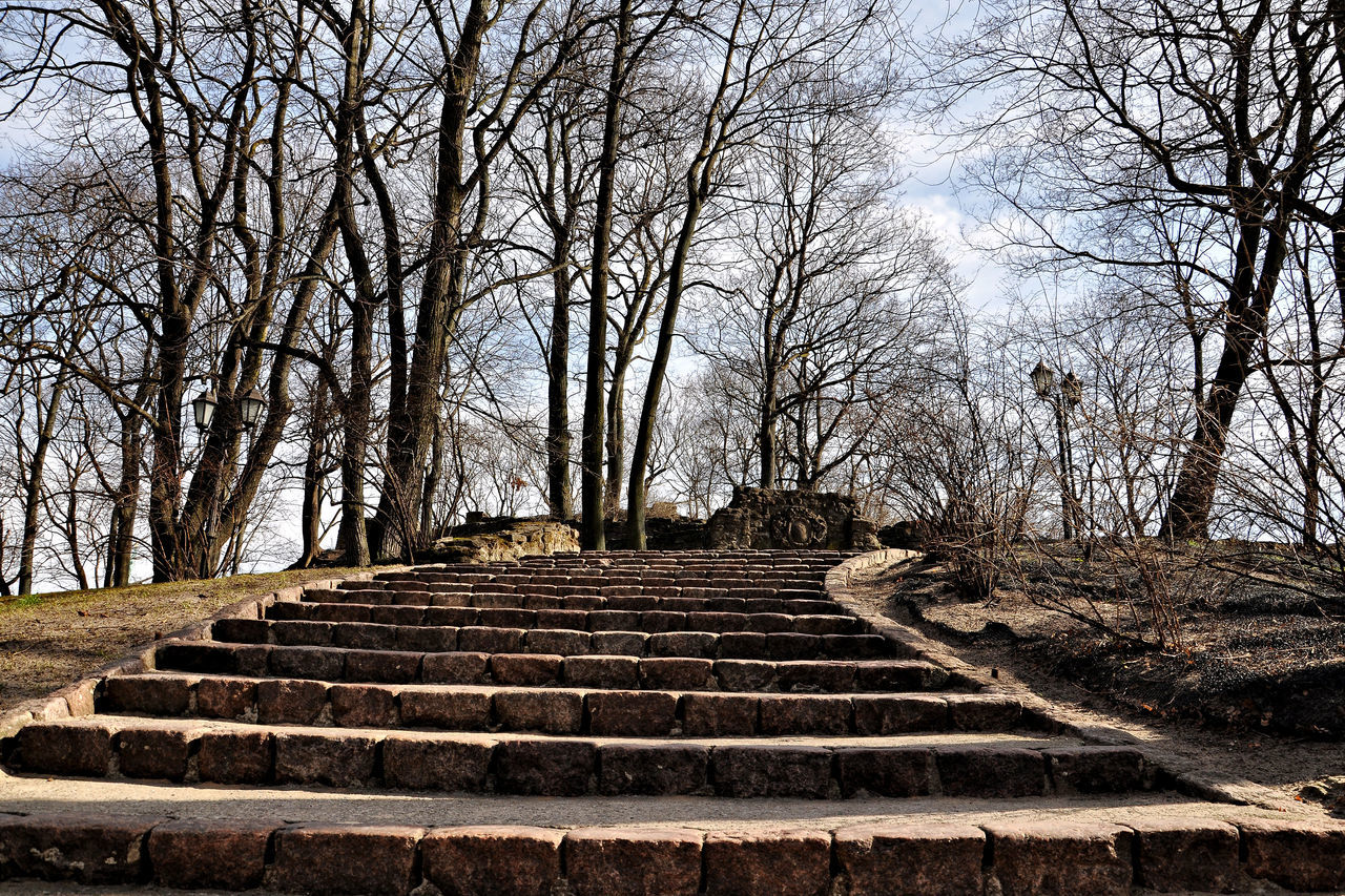 steps, staircase, steps and staircases, bare tree, tree, outdoors, day, stairs, sky, no people, tranquility, nature, travel destinations, built structure, branch, scenics, beauty in nature, architecture, ancient civilization
