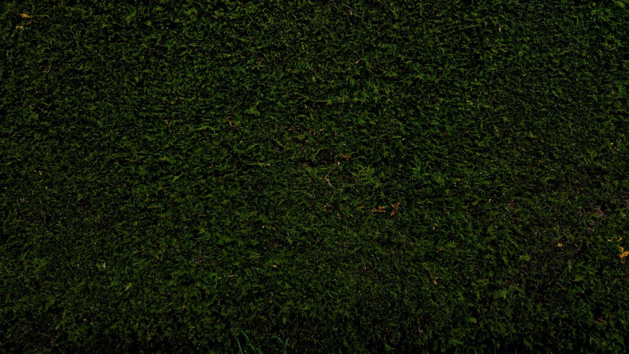 Green Wall Outdoors Grass Area Backgrounds Green Color Nature