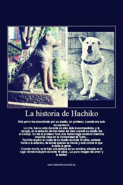 Hachiko <3... Hachiko Love