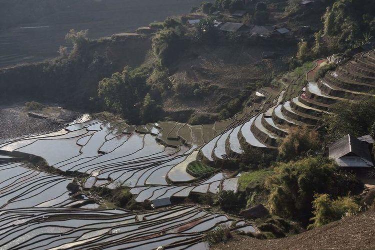 Nature Rice Farm