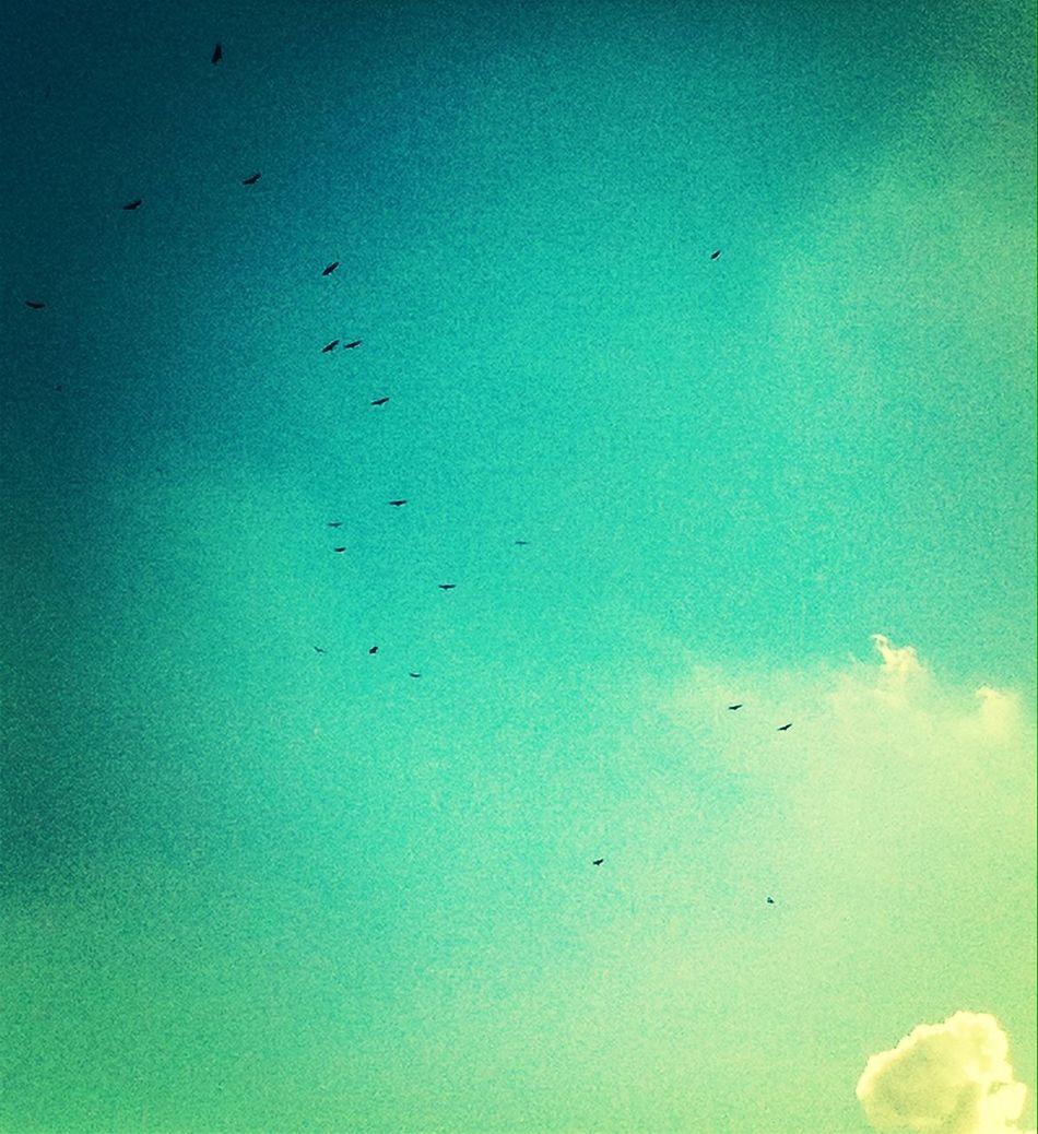 Birds In The Sky Feeling Freedom
