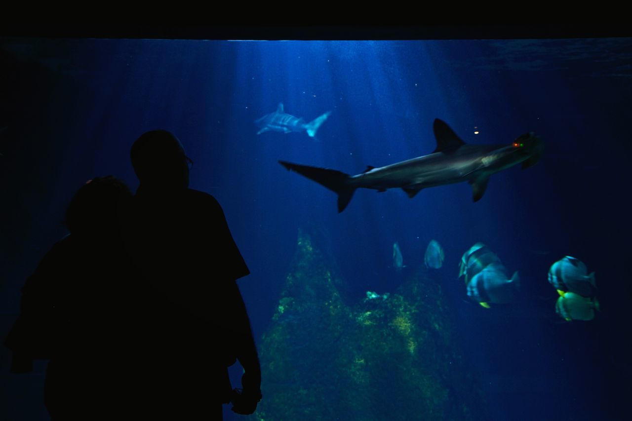 Beautiful stock photos of shark, Animal Themes, Animals In Captivity, Animals In The Wild, Aquarium