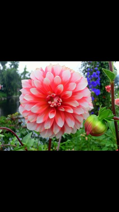 Bridge Of Flowers Flower Nature Freshness Beauty In Nature Close-up Outdoors Be
