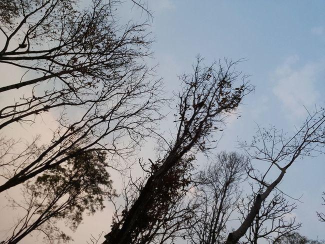 Tree Drought Autumn On Fire Thailand_allshots Thailand Sky