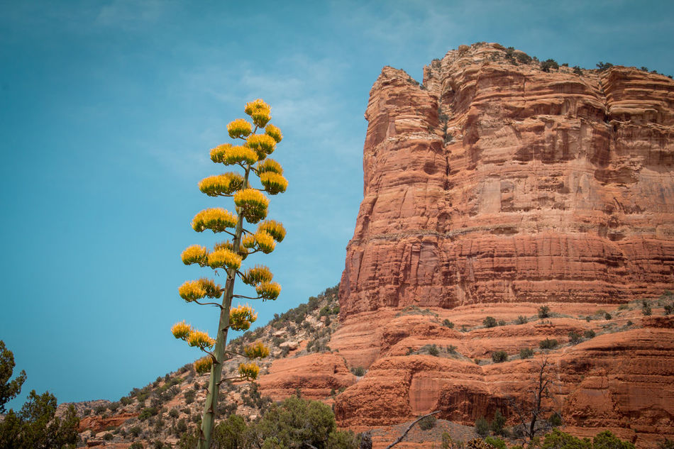 Adversity Arid Climate Day Desert Desert Flower Dry Flourishing Formation Of Nature Geology Growth Low Angle View Nature No People Outdoors Plant Plants Red Rocks  Rock - Object Scenics Sky Success Travel Destinations Yellow Flower