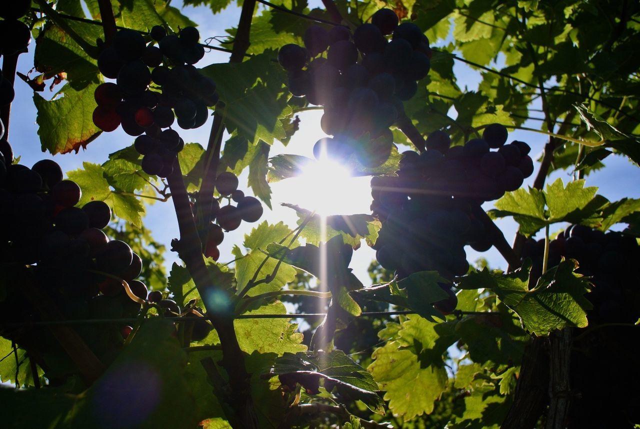 Sun Nature Tadaa Community