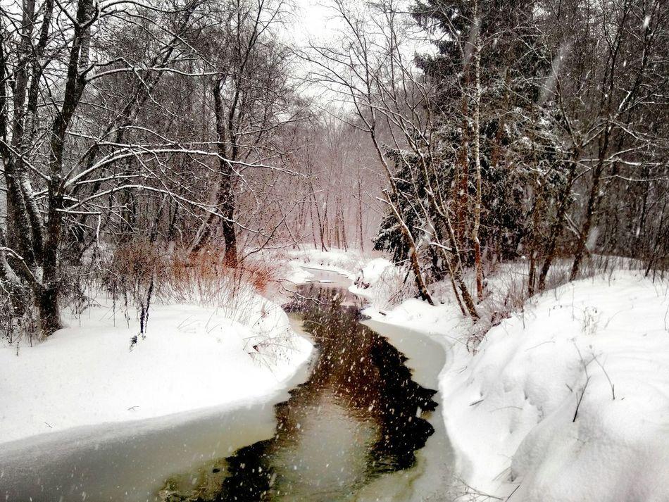 пока, зима! зима природароссии Forest River EyeEm Nature Lover Hello World Liza_berg