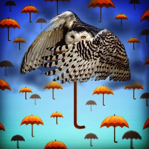 Art And Craft Creativity Focus On Foreground Gufo No People Ombrelli Owl Pastel Power Surrealism And Fantasy Art Surrealismo Surrealist Art Umbrellas