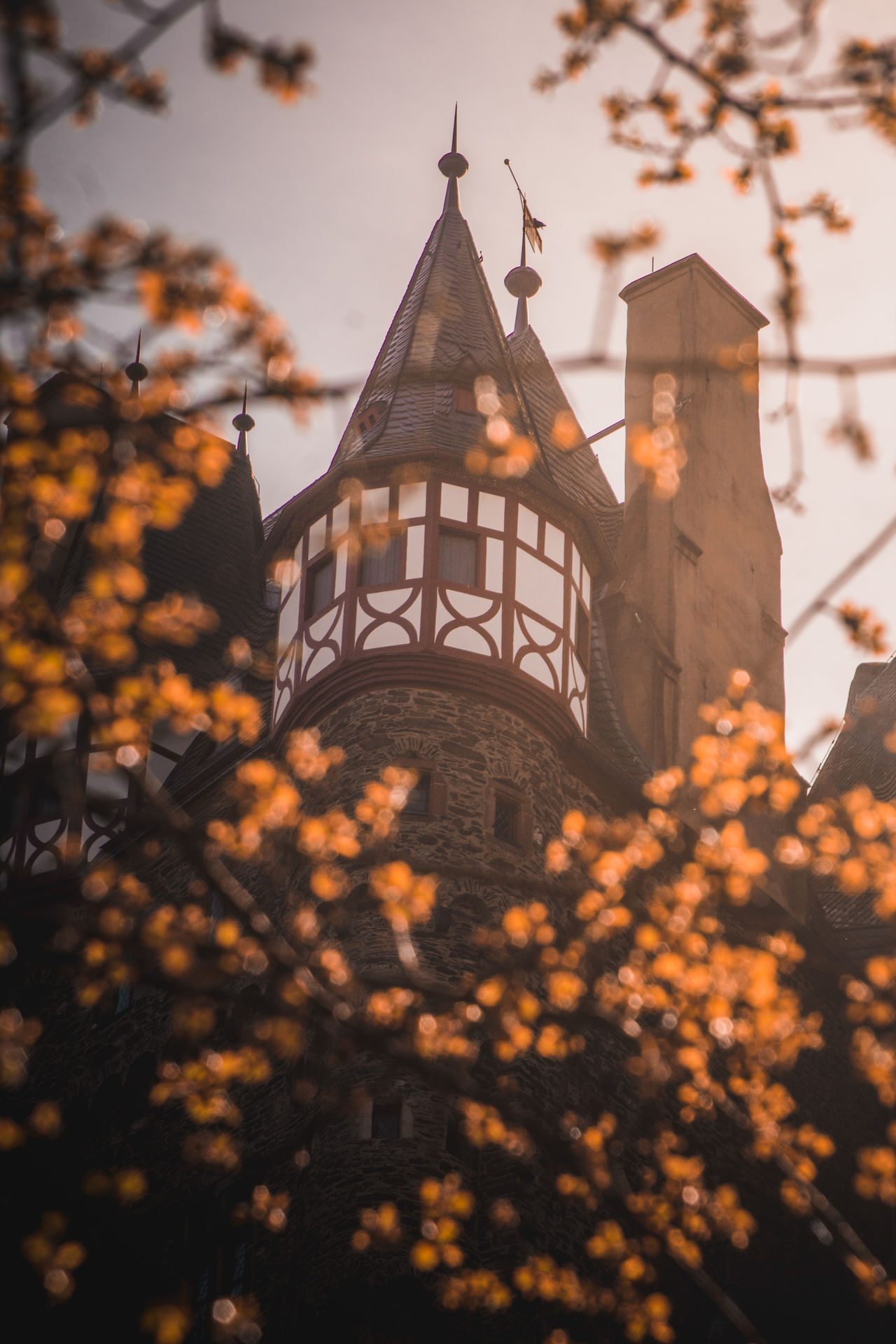 Architecture Building Exterior Sunset Built Structure History Tree Sky Outdoors No People Clock Tower Day Travel Destinations EyeEm Gallery Castle Bokeh Medieval Sunlight Low Angle View EyeEm Best Edits Eye4photography Colors EyeEm Best Shots EyeEm Countryside Close-up