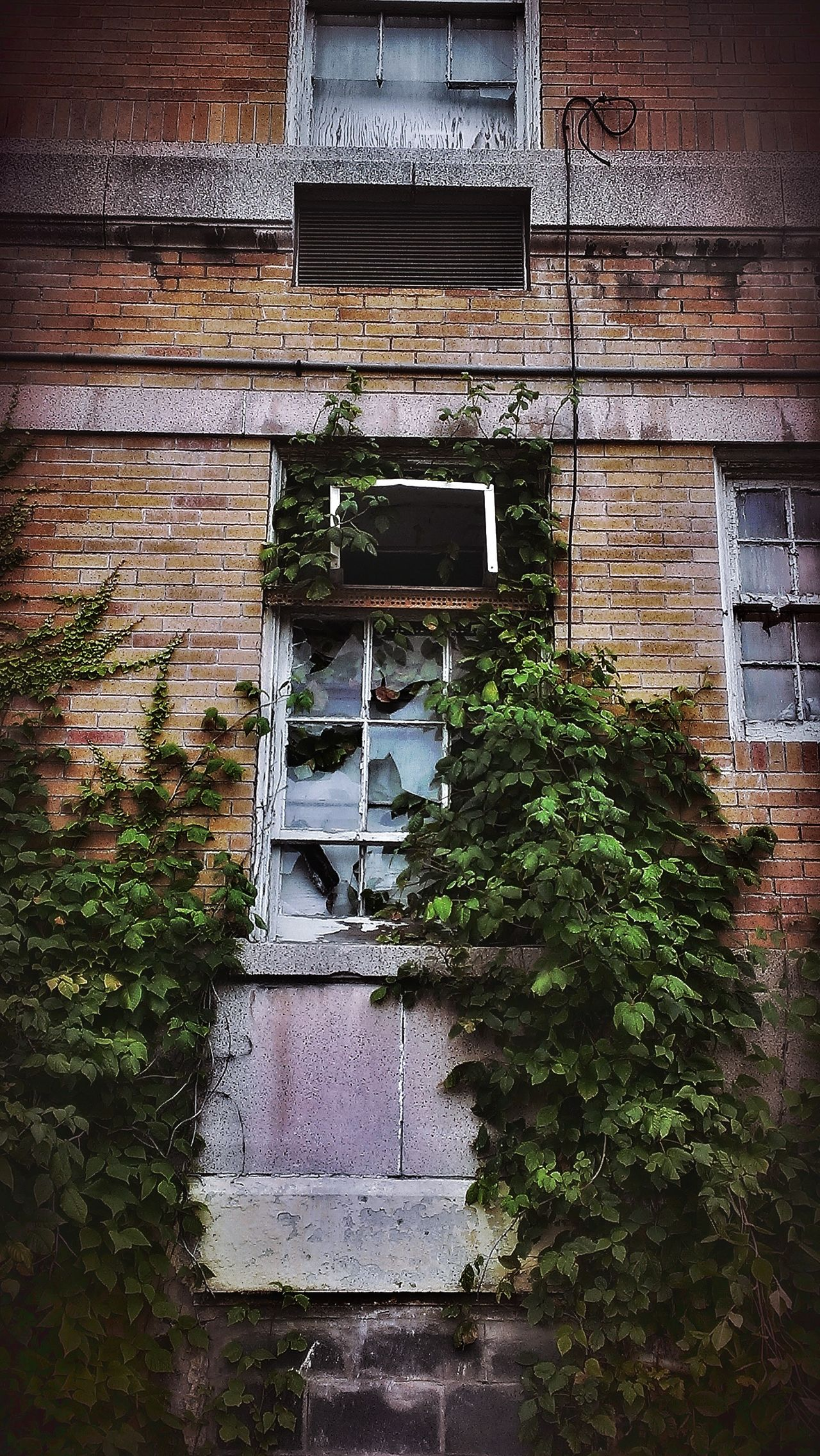 Built Structure BOB Brick Old Building Brick Building Abandoned Buildings Damaged Urbexphotography AMPt - Abandon Abandoned & Derelict AMPt - Street EyeEm Gallery Abandoned Places Creepy Building Windows Ivy Covered Wall Ivy Wall Nature Takes It Back Nature Taking Over Broken Window Windows Textured  Building Exterior Urban Lifestyle Abandoned AMPt - My Perspective EyeEm_abandonment