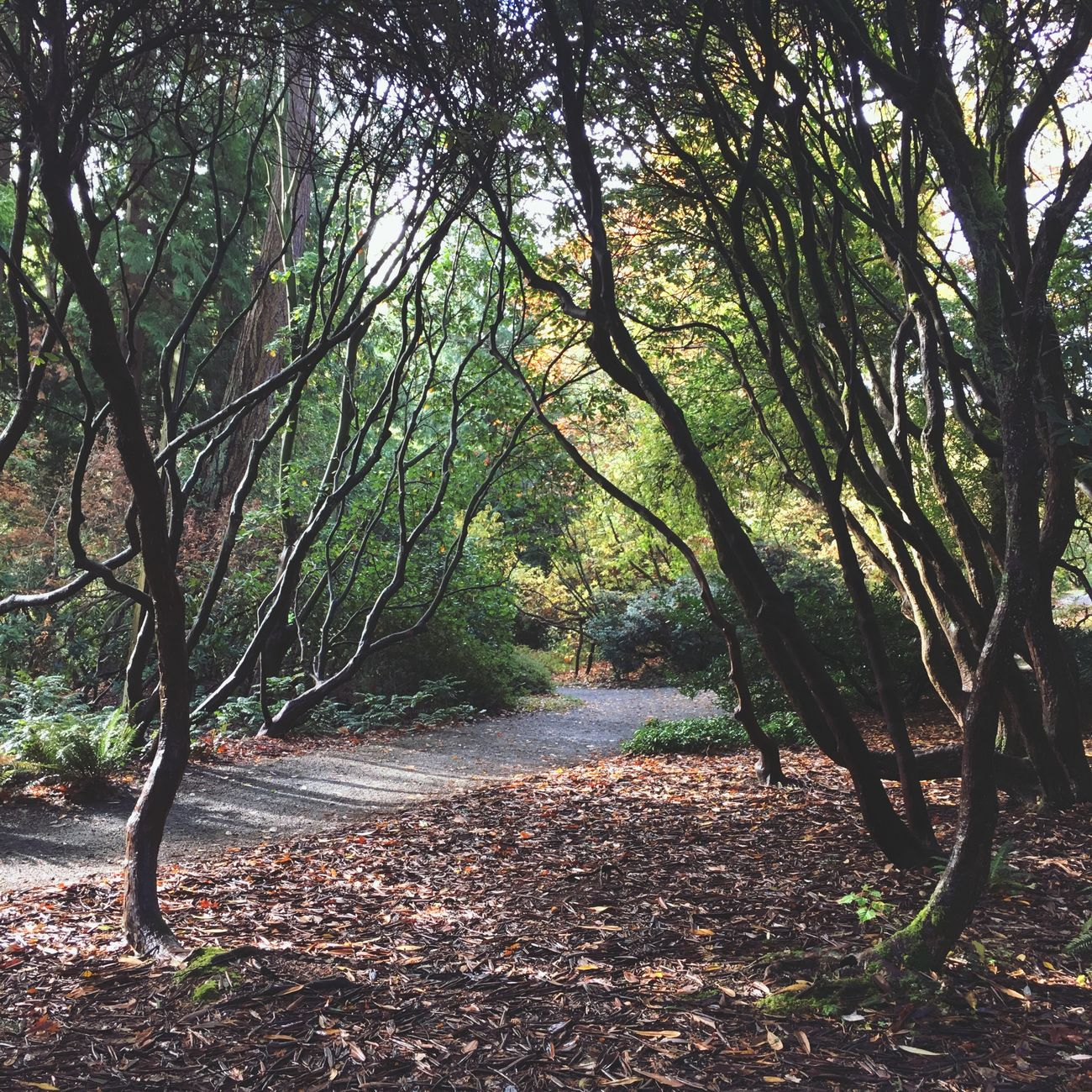 Arboretum Trees And Nature Trees Path Path In Nature Light And Shadow