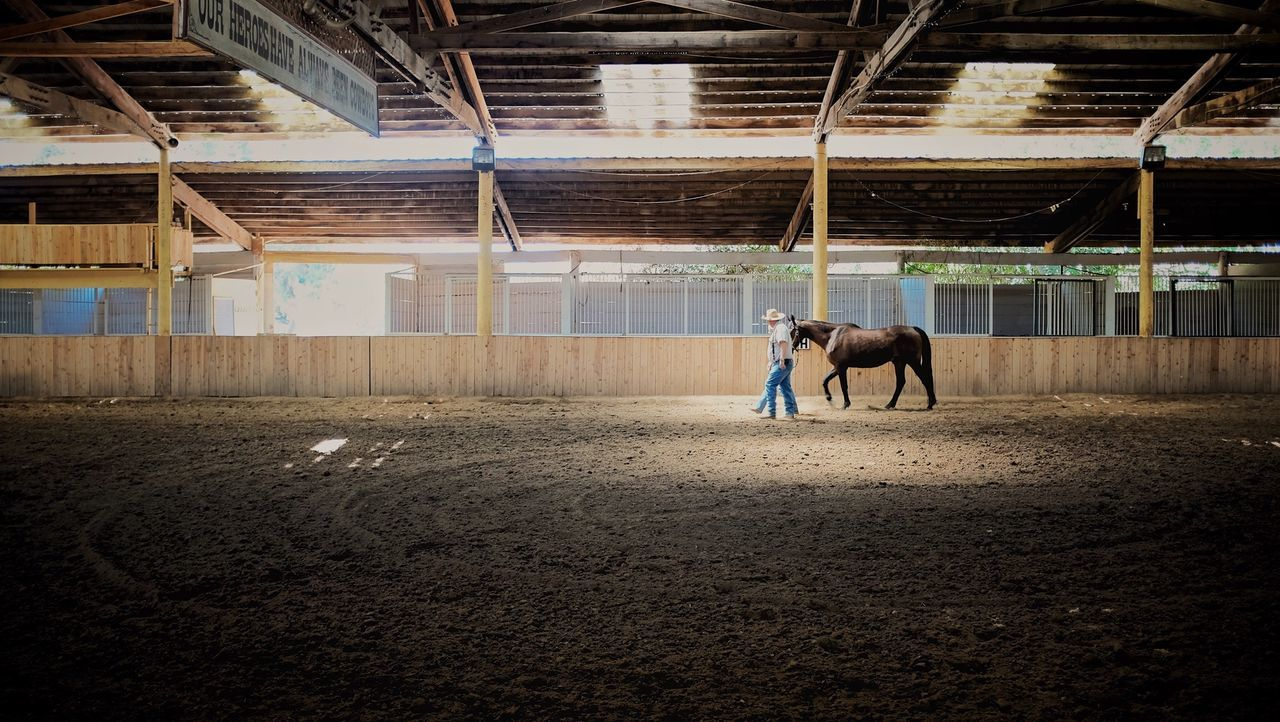 Beautiful stock photos of cowboy, American Culture, Animal Themes, Architectural Column, Architecture