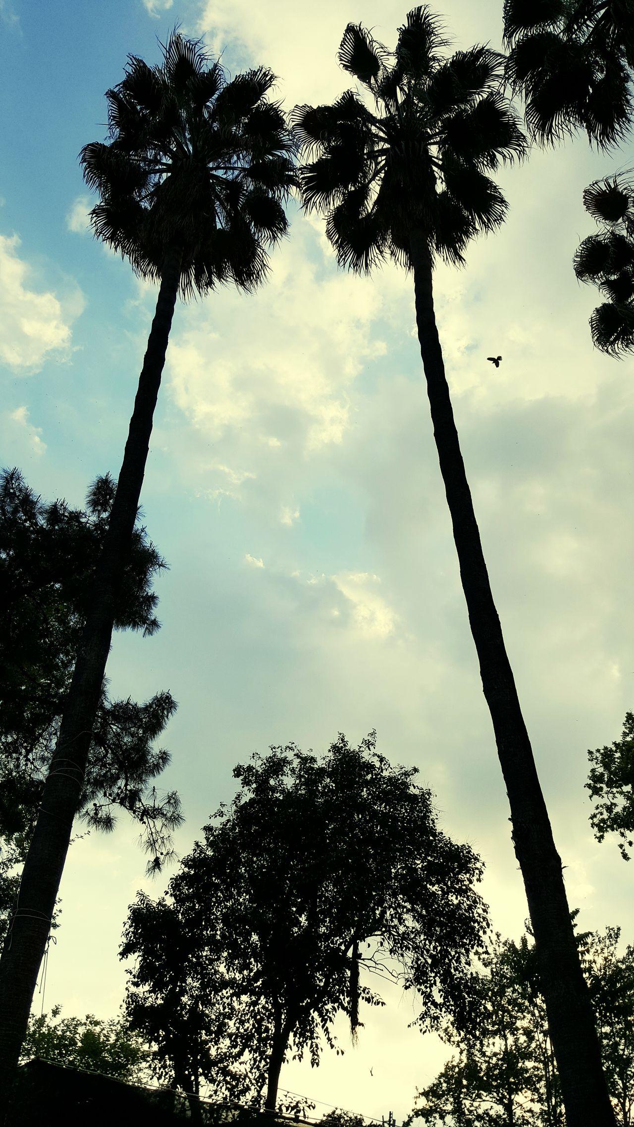 Palmiye Palm Palm Trees Palm Tree Savrun çayı Runnel Nehir Kadirli Osmaniye Adana çukurova Akdeniz Bird