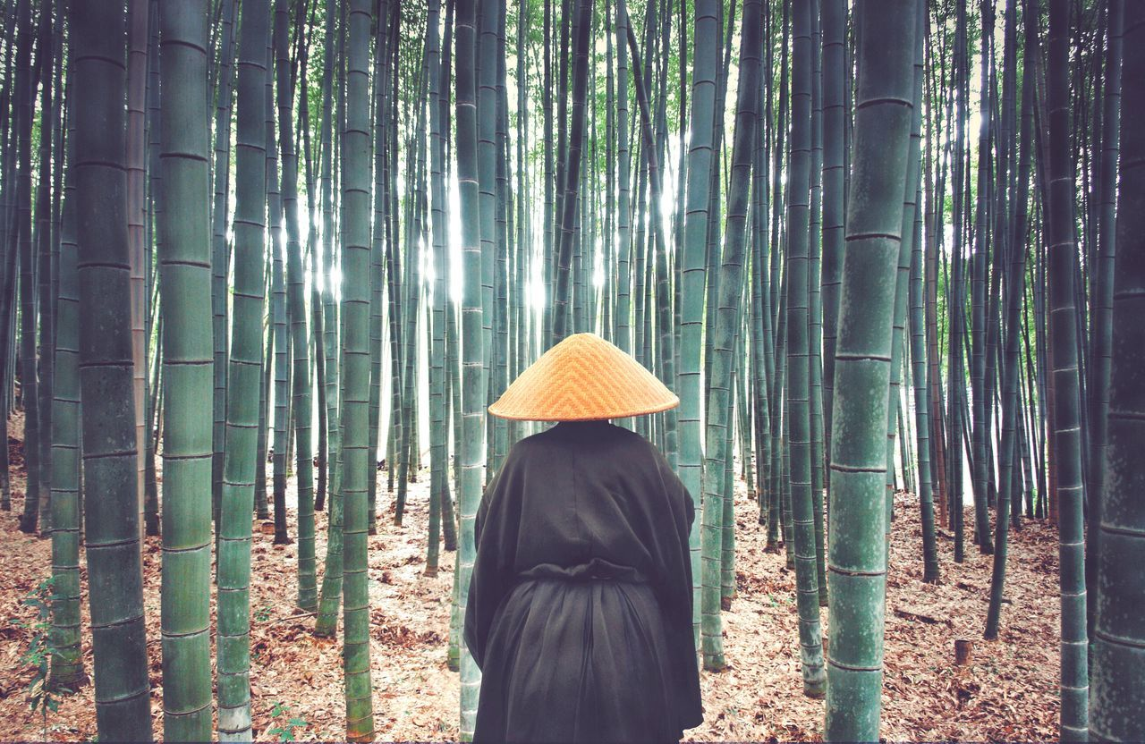 Beautiful stock photos of japan, Asian Style Conical Hat, Bamboo, Bamboo Grove, Day